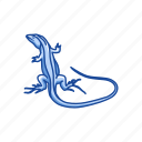 animal, invertebrate, lizard, racerunner, racerunner lizard, reptile