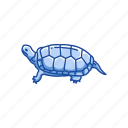 animal, bog turtle, pet, reptile, shell, small aquatic turtle, turtle