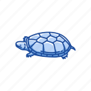 animal, kinosternon, mud turtle, pet, reptile, shell, turtle
