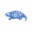 animal, freshwater, reptile, serpentina turtle, turtle, vertebrate icon
