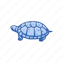 animal, clemmys guttata, reptile, semi-aquatic turtle, spotted turtle icon