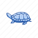 animal, clemmys guttata, reptile, semi-aquatic, spotted turtle