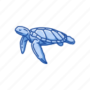 animal, reptiles, sea turtle, shell, turtle, vertebrates