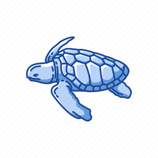Animal, reptiles, sea turtle, shell, turtle, vertebrates icon - Download on Iconfinder