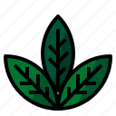healthy, herb, leaf icon