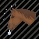 head, horse, pet, rodeo