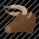 animal, bull, head, horns, rodeo