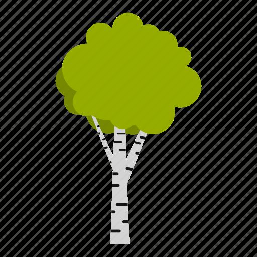 autumn, birch, forest, organic, season, tree, wood icon