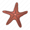 creature, sea, sea star, star icon