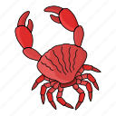 crab, sea, sea food, swim icon
