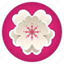 badge, blossom, cherry, festival, flower, mascot, sakura icon