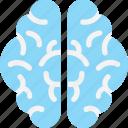 brain, brainstorming, human brain, intelligence, organ