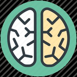 brain, head, human brain, human head, think symbol icon
