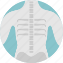 body, boons, medical, skeleton, xray icon