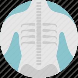 body, boons, medical, skeleton, xray icon