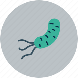 bacteria, infection, microbe, virus icon