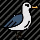 animal, seabirds, albatross, fly, bird