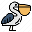 animal, seabirds, pelican, fly, bird