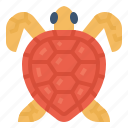 ocean, animal, marine, turtle, sea