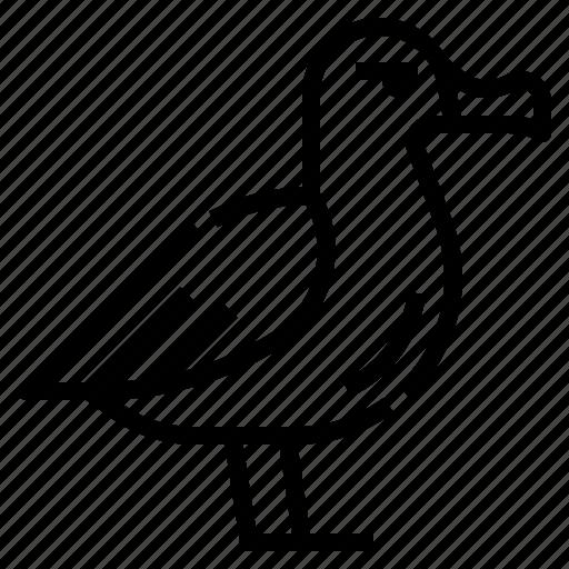 Seabirds, fly, albatross, animal, bird icon - Download on Iconfinder