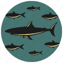 fish, school of fish, sea life, shark, shoal of fish icon
