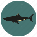 fish, sea, sea creature, sea life, sealife, shark icon