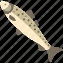 fish, food, lough, ruddle, sea