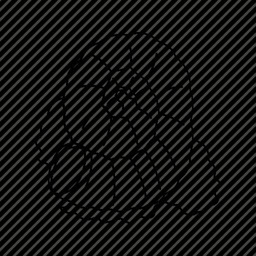 line, sangu, sea, sea shell, shell, spiritual icon