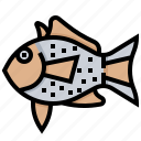 animal, aquarium, atlantic, fish, seafood icon