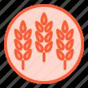 fibers, food, healthy, meal, oats