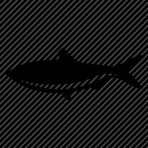 fish, lake, sea, sea creature, sealife, small fish icon