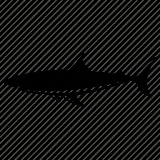 dangerous, fish, sea, sealife, shark, shark warning icon