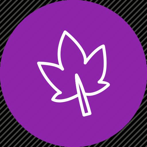 autumn, celebration & holidays, leaf icon
