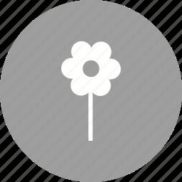 flower, garden, plant, planting, plants, pot, spring icon