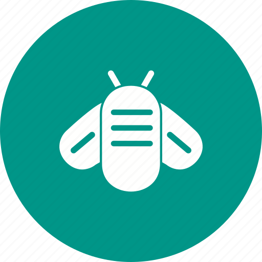 Bee, bees, fly, honey, honeybee, nature, wing icon - Download on Iconfinder
