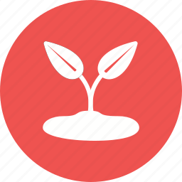 life, plant, seed, spring, sprout, tree, young icon