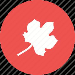 autumn, color, colorful, leaf, leaves, orange icon