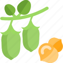 beans, food, green, groats, seeds icon