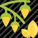 beans, food, groats, seeds, sheet