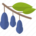 blueberry, food, groats, seeds icon