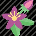 flower, groats, plant, seeds
