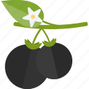 berry, food, groats, seeds icon