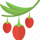 berry, food, groats, red, seeds