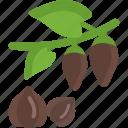 food, groats, plant, seeds, sheet