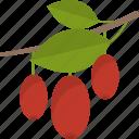 food, fruit, groats, seeds icon