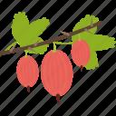 food, gooseberry, groats, seeds icon