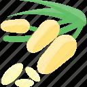 food, groats, plant, seeds, sheet icon