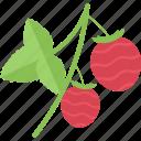 berry, food, groats, seeds, sheet