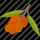 food, groats, seeds, viburnum icon