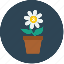 dollar sign, dollars flower, flower, money plant icon
